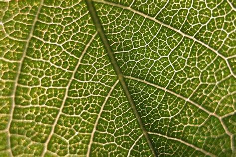 photo leaf macro micro green nature  image