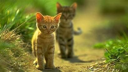 Desktop Cats Wallpapers