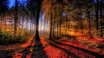 Fall Autumn Forest Sunlit