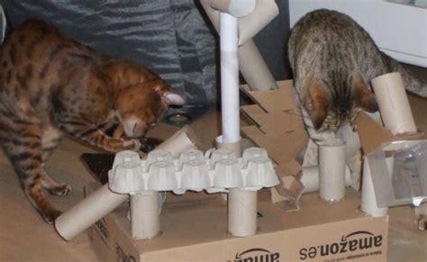 katzenspielzeug selbst gemacht katzenfreude archive coco und nanju