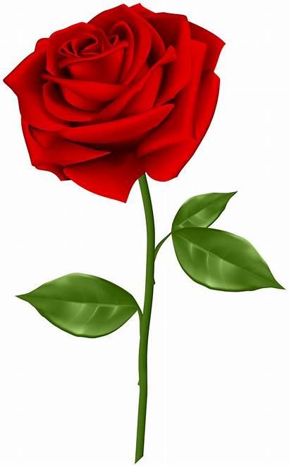 Rose Transparent Clip Flower Yopriceville Backgrounds Roses