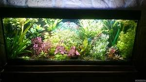 Co2 Rechner Aquarium : fischsuppe flowgrow aquascape aquarium database ~ Orissabook.com Haus und Dekorationen