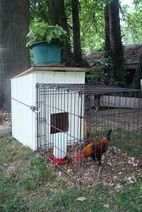 Best 25 chicken coop run ideas on pinterest chicken for Dog house pen