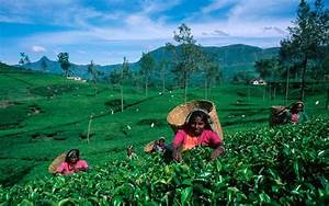 Organizational Structure Of A Business A Heritage Of Excellence The Wonderful History Of Ceylon Tea