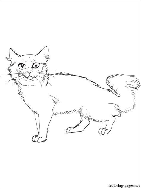 siberian cat coloring page coloring pages