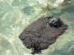 mop dog GIFs Search | Find, Make & Share Gfycat GIFs