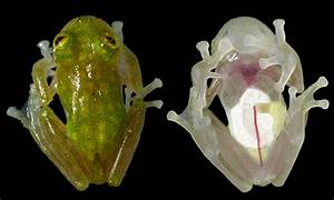 The Most Astounding Transparent Animals - All That Is ...