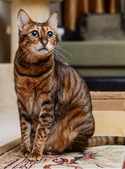 Exotic Cat Names Kittens Female Strong Savannahs