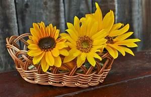 Baskets, Of, Flowers, Sunflower, Free, Stock, Photo