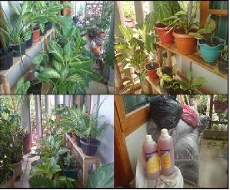 waktu pemupukan tanaman hias