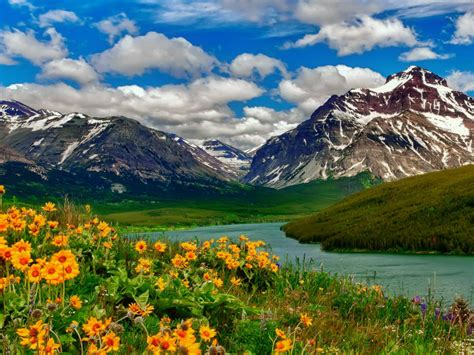 spring landscape wild flowers yellow color lake mountains