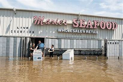 Flooded Seafood She Marie Market Hope Huffpost