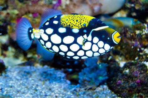 fish    tank mates     social discus