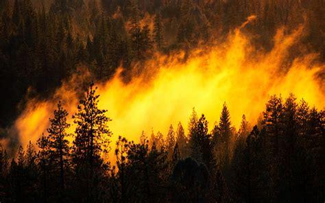hd amazing forest fire widescreen high resolution