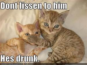 1000+ images about drunk cats on Pinterest | More beer ...