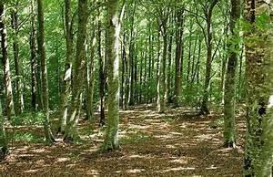 Foret à Bois : l occitanie veut oxyg ner sa fili re for t bois ~ Nature-et-papiers.com Idées de Décoration