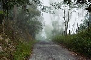 Free Images : landscape, tree, nature, forest, pathway ...