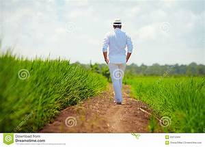 Young Adult Man Walking Away On Path Through The Rice ...