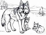 Coloring Wolf Pages Baby Print Printable Wolves Colouring Sheets Adults Books Drawing Puppy Popular Animal Coloringhome sketch template