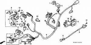 Wire Harness For 1996 Honda Ch125