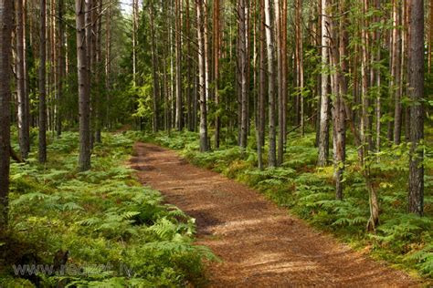 Meža taka - Taka - redzet.eu