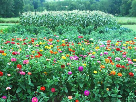wallpaper flower garden hd
