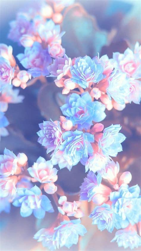 blue pink flower wallpaper phone
