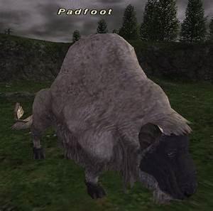 Padfoot FFXIclopedia FANDOM powered by Wikia