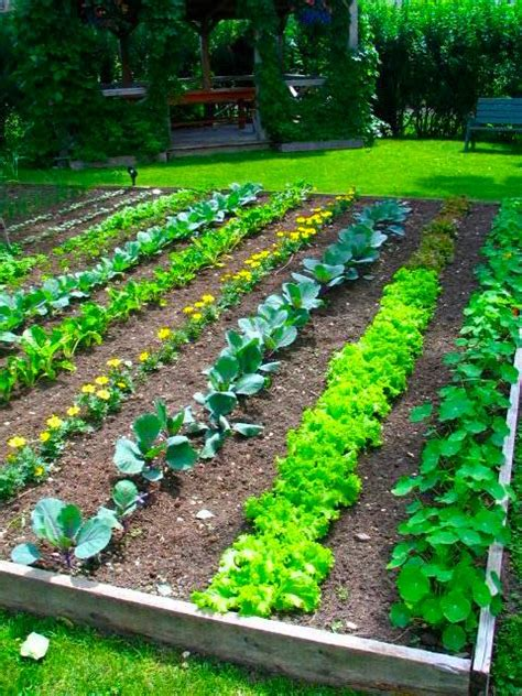 Garden Vegetarian - backyard vegetable garden design plans ideas