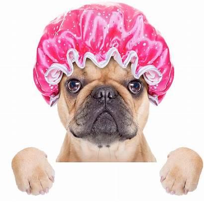 Canine Hydrotherapy Rehabilitation