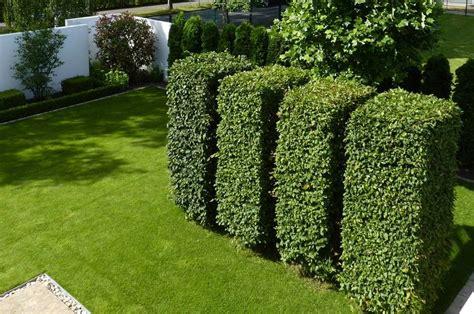 immergrüne bepflanzungen am gartenzaun nicht nur immergr 252 ne eignen sich f 252 r formschnitte eine