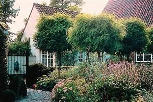 Baum Vorgarten Immergrün : kugelb ume f r den vorgarten ~ Michelbontemps.com Haus und Dekorationen
