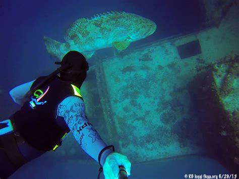 grouper goliath divers better stories down go itemid tent tn index