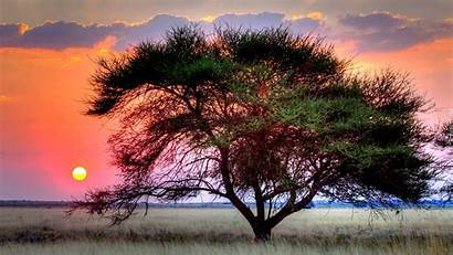 Trawa Drzewo Niebo Informazioni Tapety Tapeciarnia Noara