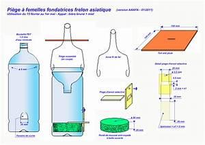 Piege A Frelon : pi ge femelles fondatrices frelon asiatique tr s ~ Farleysfitness.com Idées de Décoration