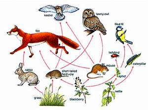 A Typical Food Web Diagram Used In School Textbooks To