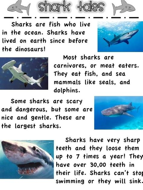 25 best ideas about shark facts for on 915 | ea9d065e337a95c403b46b785f5ac26d