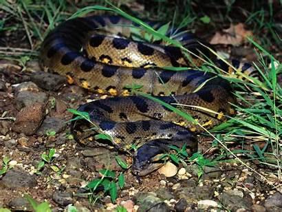 Anaconda Xyz Gemerkt Aewallpaper Von