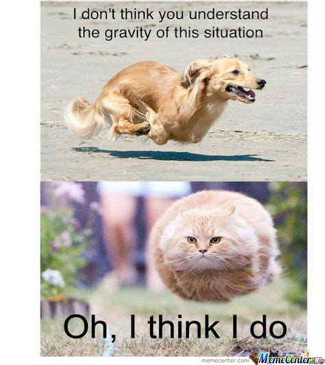 Pictures Of Memes - gravity memes best collection of funny gravity pictures