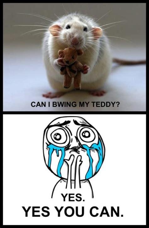 Cuteness Overload Meme - cuteness overload know your meme