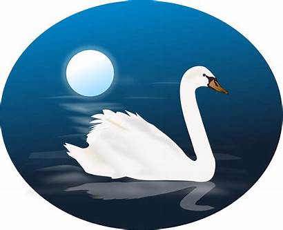 Swan Clipart Clip Swans Svg