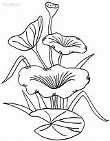 Lily Coloring Pad Pages Printable Drawing Cool2bkids Lilies Flower Stem Pads Colouring Water Sheet Plant Template Sheets Pond Frog Getcolorings sketch template