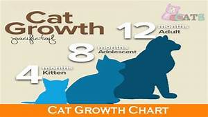 Cat Growth Chart And The Growth Of Cats