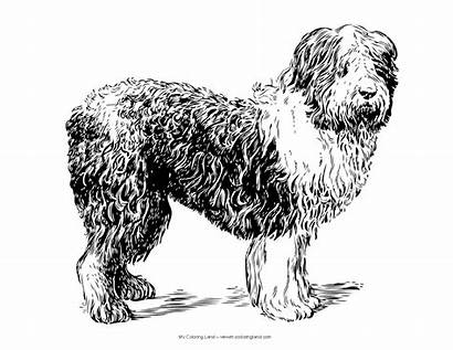Coloring Dog Pages Realistic Dogs Mycoloringland