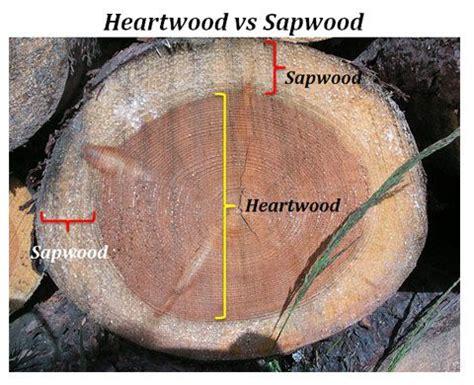 heart wood  sap wood  types  wood