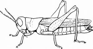 Grasshopper Clip Art at Clker.com - vector clip art online ...
