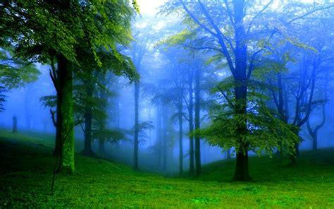 Green Forest Image Desktop by Forest Fog Wide Desktop Background Wallpaper Free Nature