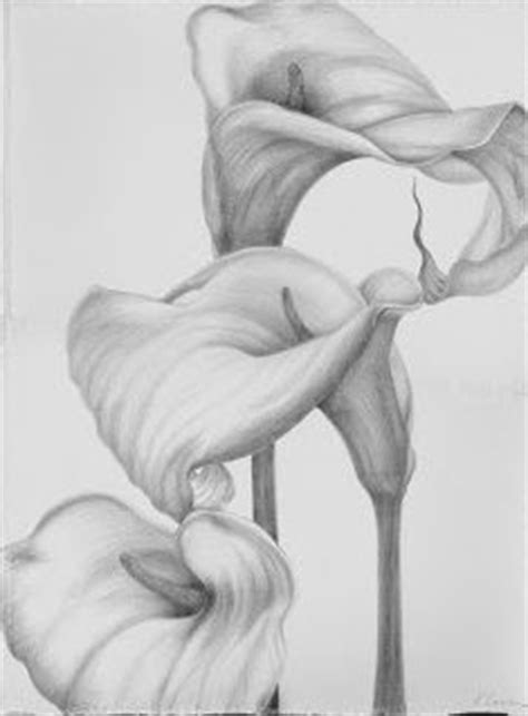 Charcoal drawing of calla lilies | Artist at Work in 2019 | Lilies drawing, Beautiful flower