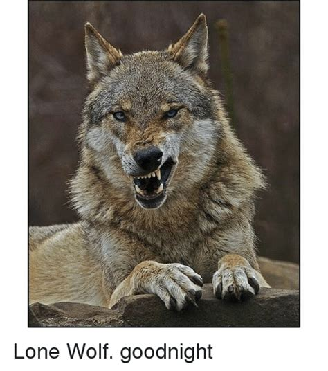 Lone Wolf Meme - lone wolf meme 100 images lone wolf ferrorist wolf meme on sizzle lone wolf attacks by