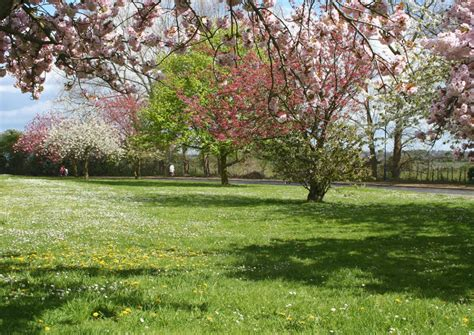 Im Frühjahr by Spr 252 Hger 228 T Im Fr 252 Hjahr Hintergrundbilder Spr 252 Hger 228 T Im